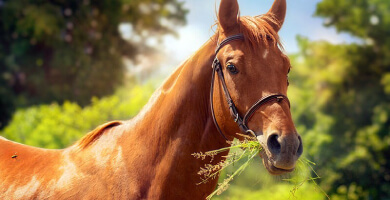 Les plantes toxiques pour les chevaux