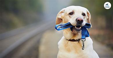 Quelle laisse choisir pour son chien ?