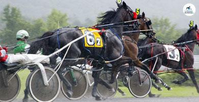 Focus race - Le Trotteur Français