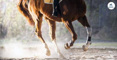 Les signes de l'arthrose chez le cheval