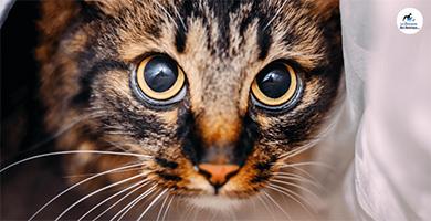 Pourquoi mon chat tremble-t-il ?