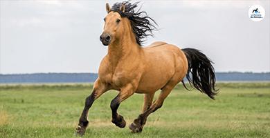 Quels sont les 6 besoins vitaux chez les chevaux ?