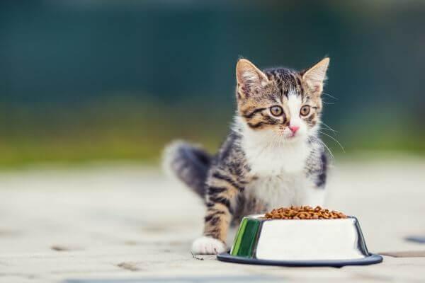 comment choisir ses croquettes pour chat