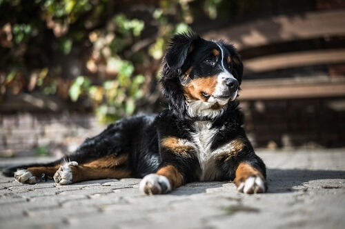 Cestodes, ascaris et vers du chien