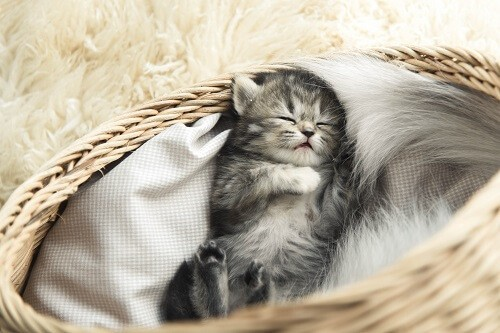 Combien de temps dort un chat