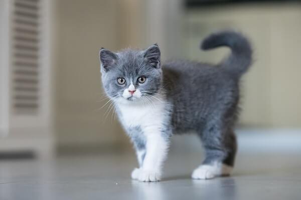 Comment apprendre a un chaton a aller dans sa litiere