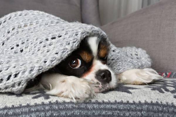 solution anti stress chien orage