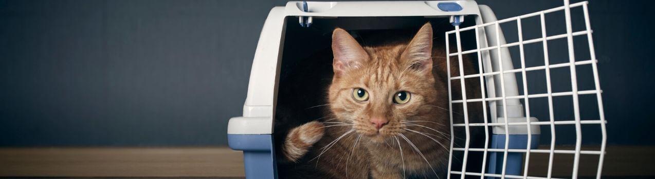 Comment choisir sa cage ou caisse de transport pour chat