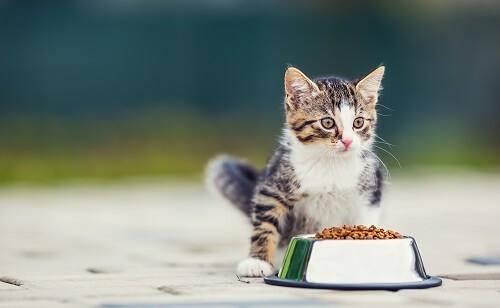 Comment choisir sa gamelle pour chat