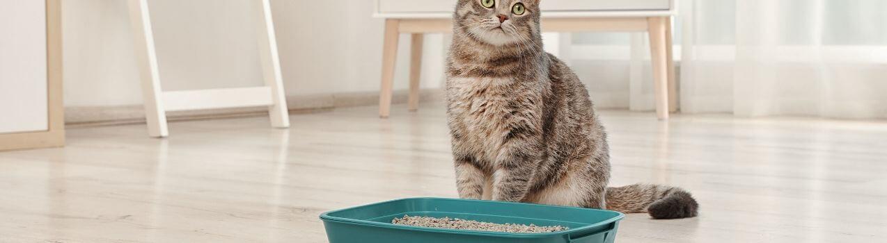 Comment choisir sa litiere pour chat
