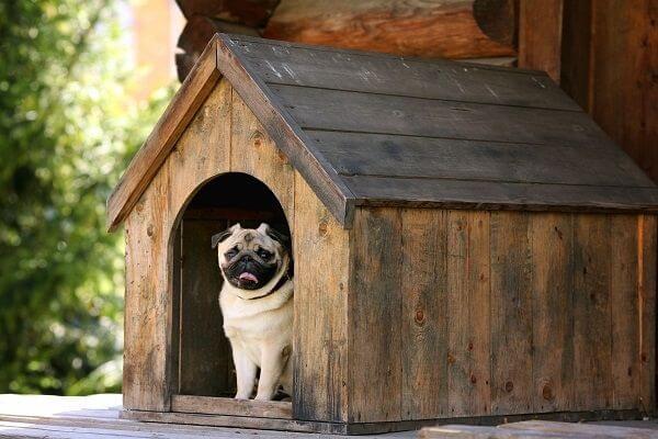 Comment choisir sa niche pour chien