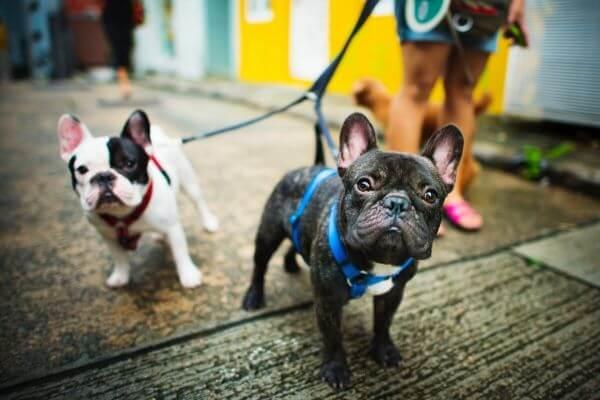 Comment choisir son harnais pour chien