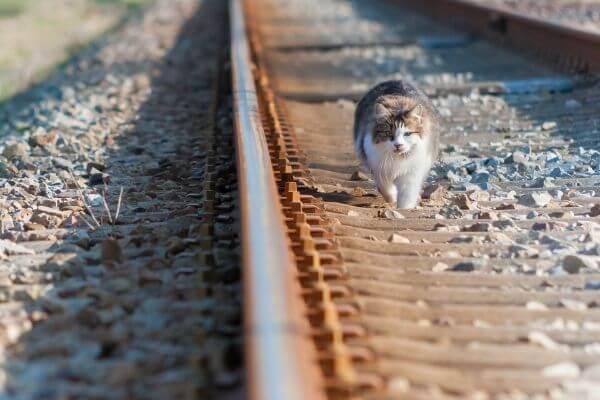 Comment eviter la fugue du chat