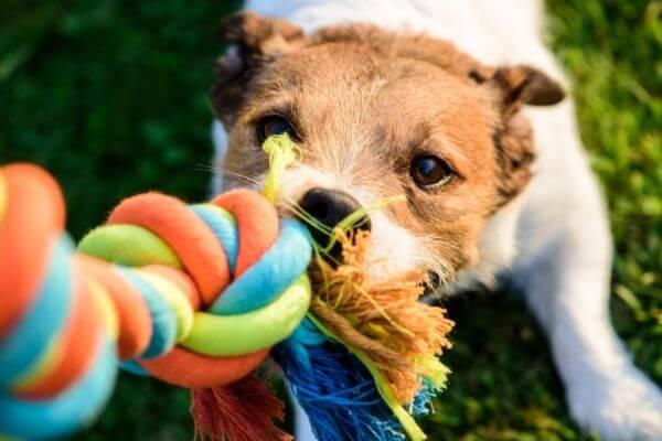 Comment stimuler mentalement son chien