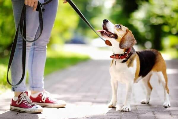 Comment utiliser une longe pour chien