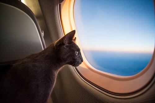 Comment voyager en avion avec son chat