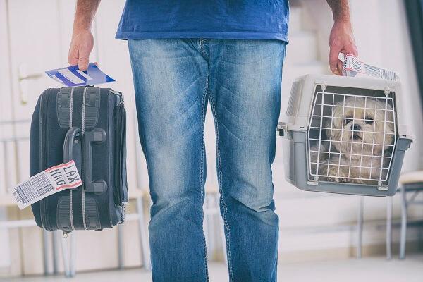 Comment voyager en avion avec son chien