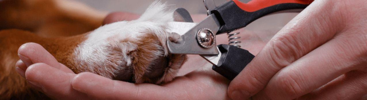couper griffe de son chien