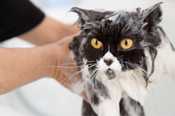 Entretien du poil et de la peau du chat