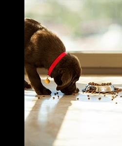 Focus sur l'alimentation du chiot
