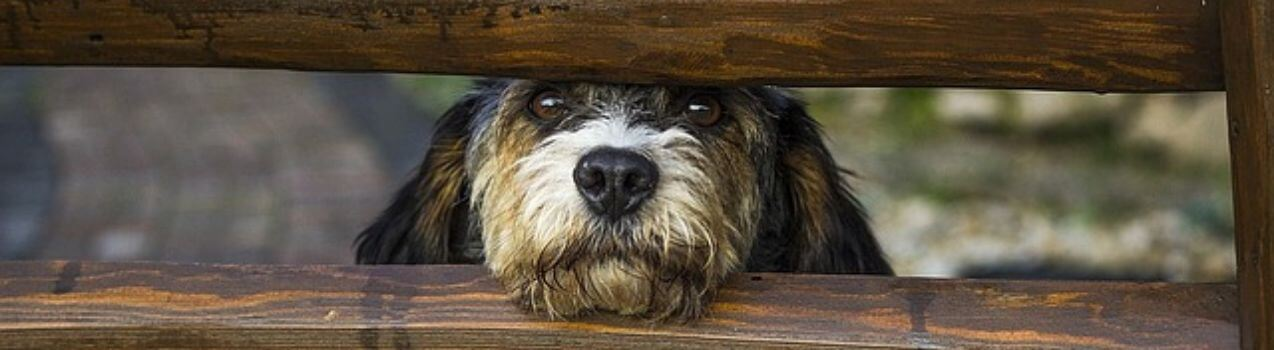 mon chien fugue, que faire ? Causes et solutions