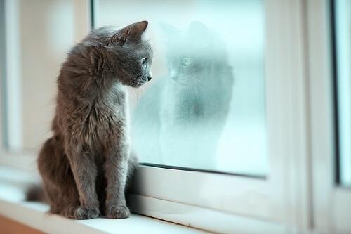 Les chats sont -il malheureux en appartement