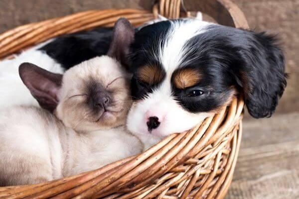 Les différents types de couchage pour chien