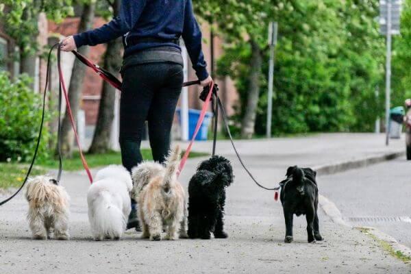 Les meilleures laisses pour chien