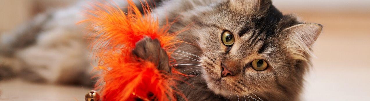 Les meilleurs jouets pour chat