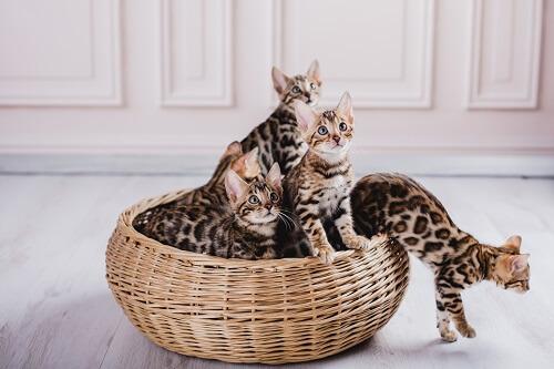 Les types de paniers pour chat