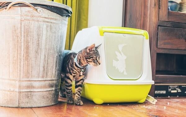 Ou jeter sa litiere pour chat