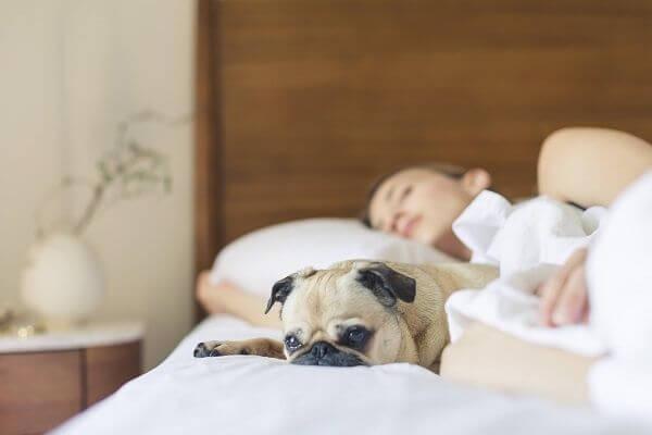 Peut-on dormir avec son chien