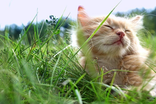 Peut-on laisser son chat dehors la journée