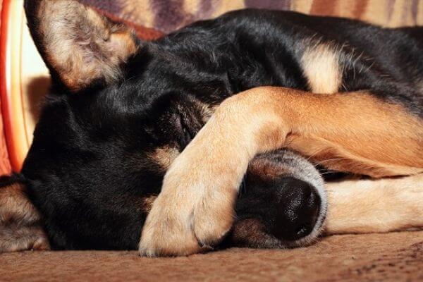 Peut on laisser son chien dormir dehors