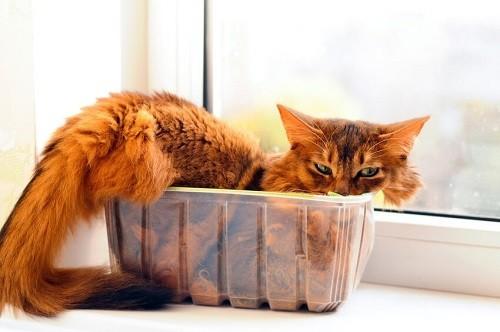 Pourquoi les chats adorent-ils les boites