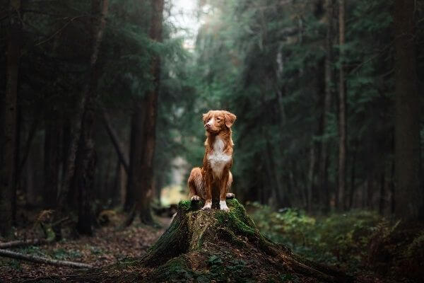 Promenade chien en securité
