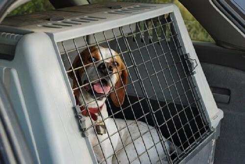 Quelles caisses de transport choisir pour son chien ?