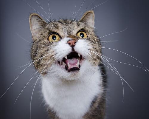 Quand changer la litiere du chat