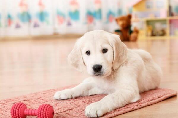 Quels jouets choisir pour son chien