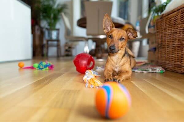 Quels jeux d'interieur pour chien