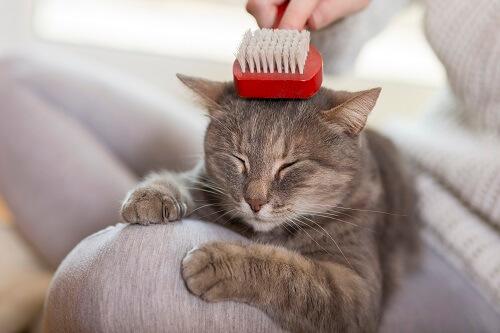 Tout savoir sur les peignes antipuces pour chat