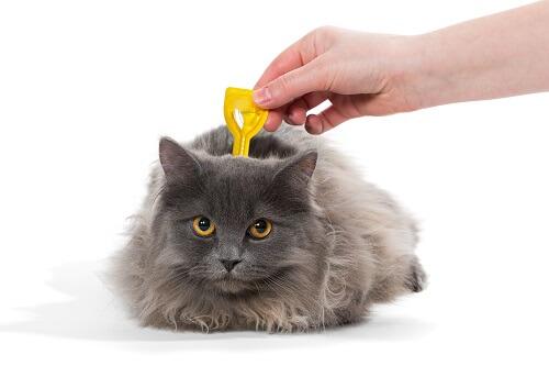 Tout savoir sur les pipettes antipuces pour chat