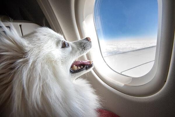 Transporter son chien en avion