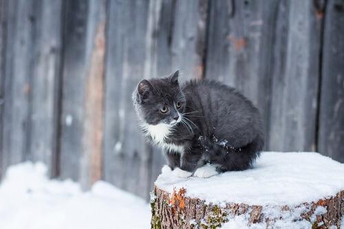 Un chat peut il avoir froid