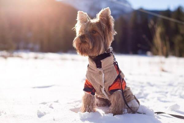 chien froid en hiver
