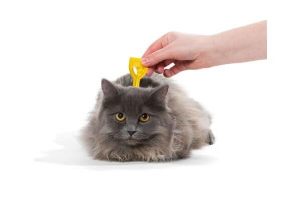 comment apliquer une pipette antipuce a son chat