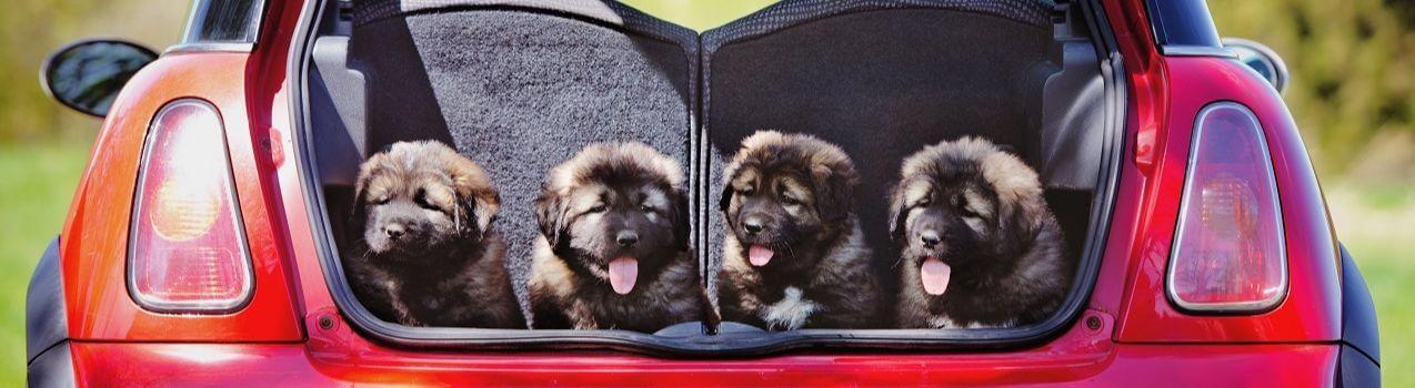 comment choisir sa caisse de transport pour chien
