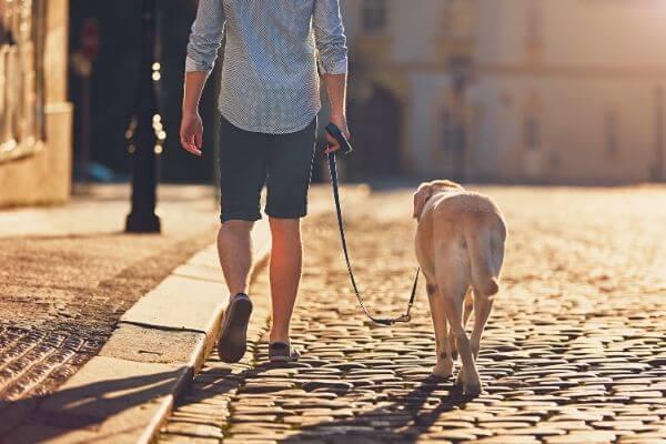 comment choisir sa laisse pour chien