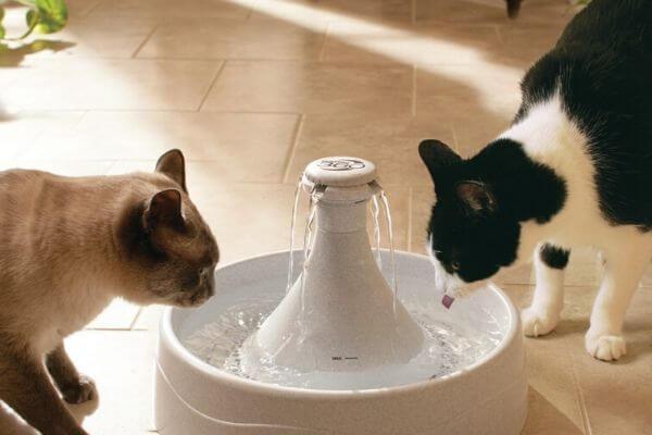 quantité d'eau pour chat