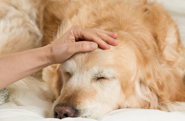 quelles sont les causes de l'arthrose du chien
